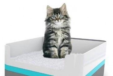 פטנט: ארגז צרכים שמודיע שהחתול חולה