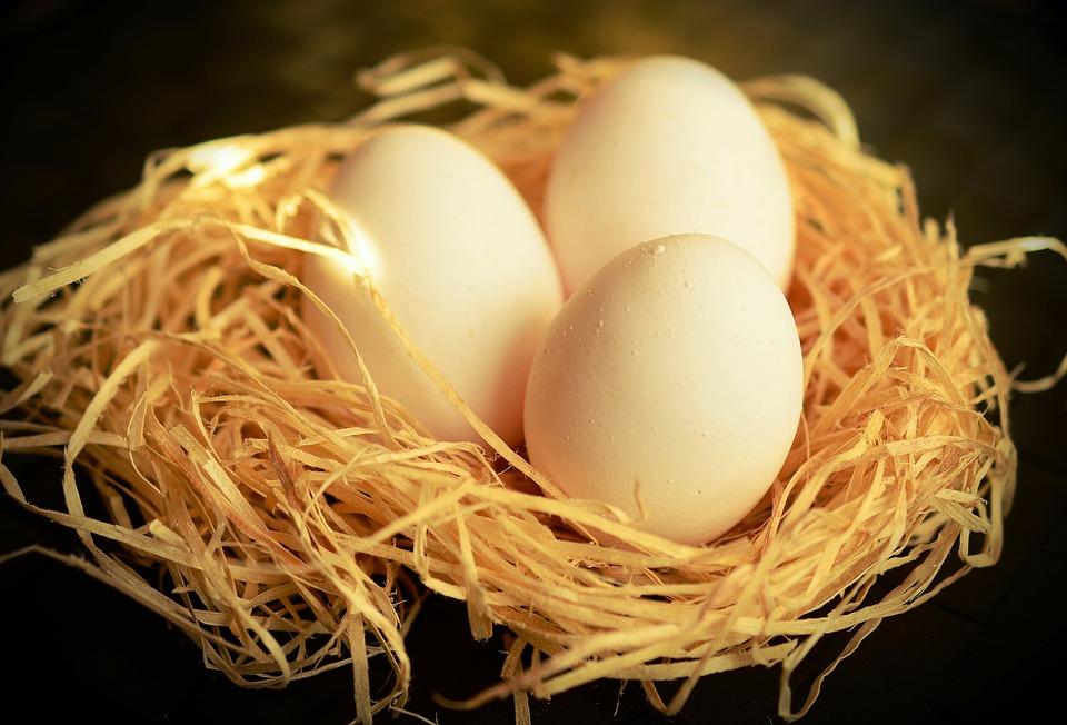 עימות ישיר. ביצים | צילום: pixabay.com