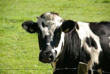 תוכנית חדשה להוזלת מחיר הבשר בישראל
