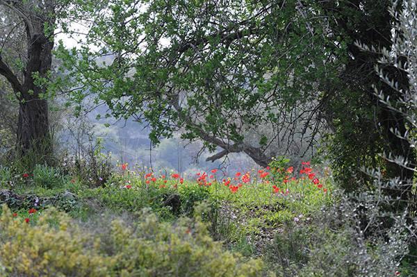יער נוה צוף|צילום: שחר כהן תיירות בנימין