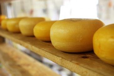 פטור ממכס ל-5,600 טון גבינות קשות